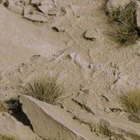 Arid Steppe Bases -
